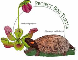 Project Bog Turtle